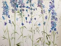 Blue and Mauve Delphiniums