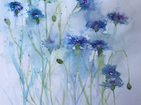 Meadow Cornflowers