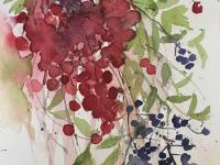 Hawthorn and Privet Berries