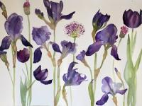 Irises, Alliums and Tulips