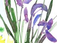 Irises 2