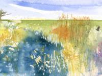 Reeds in Spring Sunshine