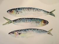 Norfolk Catch