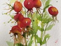 Rose Hip Stems
