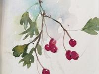 Winter Haws