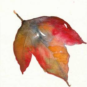 Autumn_leaf_6