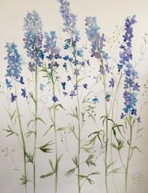Tall delphiniums against a white background