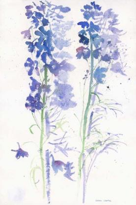 Blue_Delphiniums_Shadow