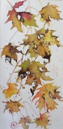 Yellow/gold autumn leaves tumbling downwards