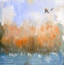 Birds flying across golden reeds and water Wicken Fen