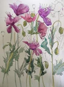 Pink/mauve poppies with ink painted and drawn