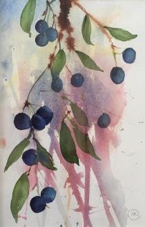 Sloes againsta pink/blue/mauve background with leaves