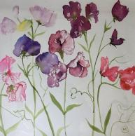 A selection of pink, purple sweetpeas