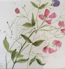 Pink sweetpeas and foliage against a white background