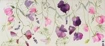 Sweetpeas, ammi and lavender intertwining on a white background