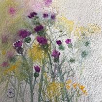 Purple Knapweed and yellow daisies