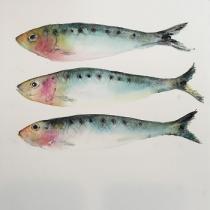 Three sardines in irridescent colours